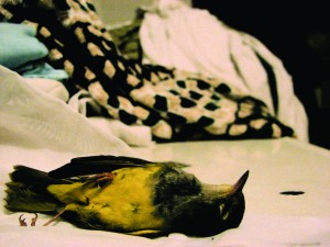 dead-bird2